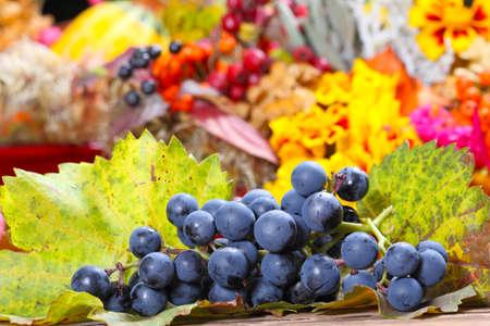 wijnbladeren: Druiven op wijnbladeren