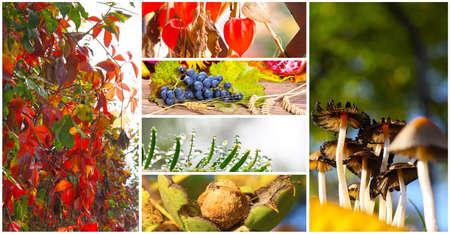 autumn motif: Autumn time Stock Photo