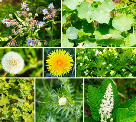 Wild and medicinal herbs photo