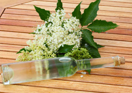 Elderflower liqueur photo