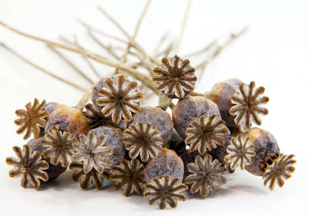 toxicology: Dried poppy heads Stock Photo