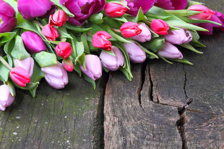 Tulips on old wooden board  Stock Photo