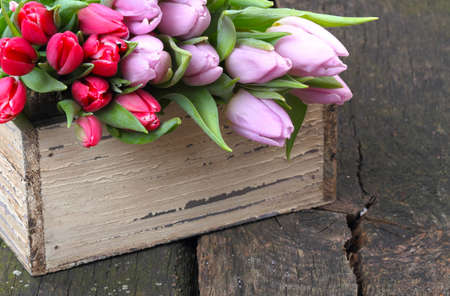 Tulips for sale  photo
