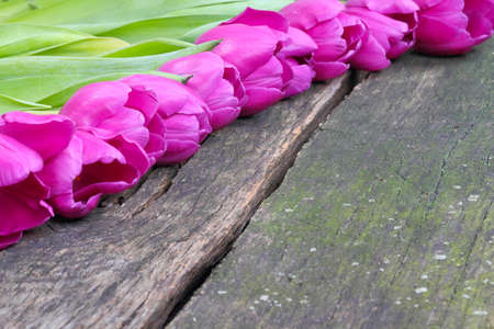Tulips on old wooden board  photo