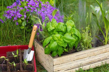 Gardening, Plants  photo