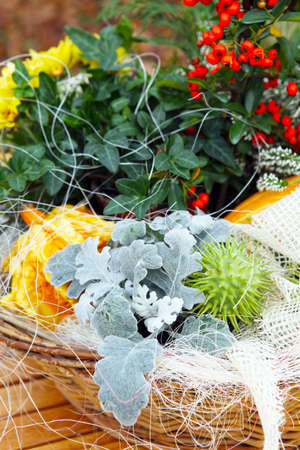 Floristry in autumn  photo