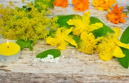 Yellow medicinal herbs and globules  photo