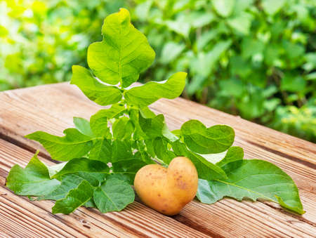sufficiency: Potato heart, gardening with love