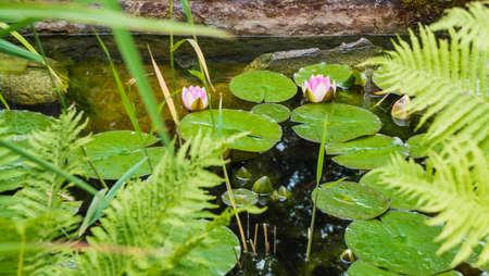 bassin jardin: Petit �tang de jardin Banque d'images
