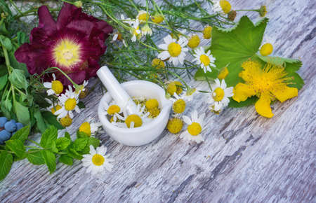 Chamomile, St. Johns wort, Ladys mantle, peppermint ...  photo