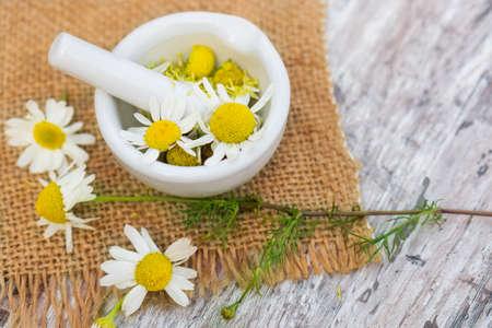 medicinal plant: Chamomile, medicinal plant