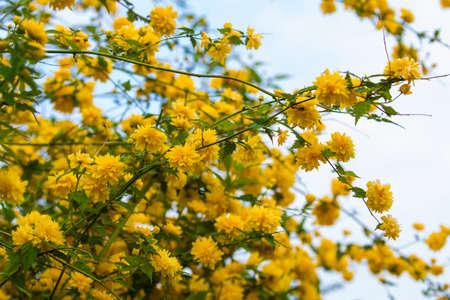 florets: Gold florets