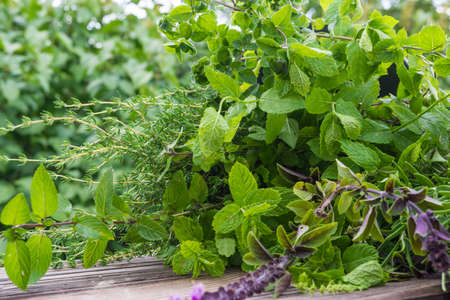 Garden herbs, medicinal plants  Banque d'images