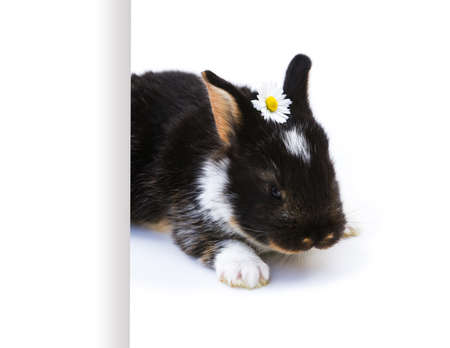 Easter Bunny, white background, photo