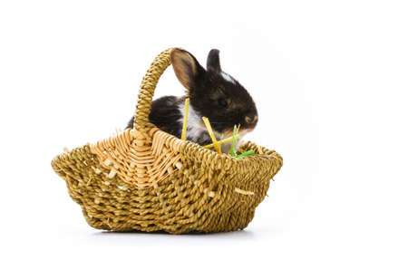 Easter bunny in basket photo