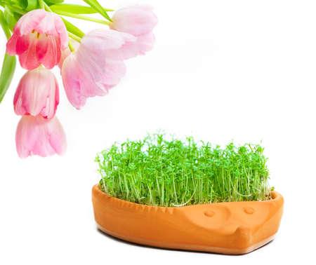 cress: Tulips, cress
