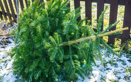 Collection point for Christmas trees