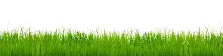 pastures: Isolated green grass