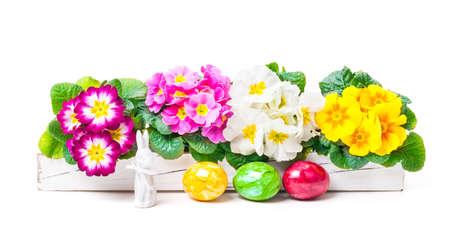 primroses: Easter decoration with primroses