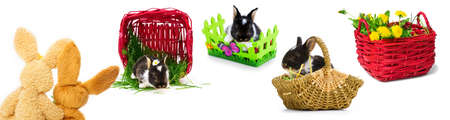 Easter bunnies, Easter Baskets, Easter photo