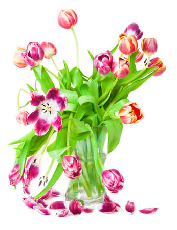 nostalgia: Tulips, petals, Nostalgia