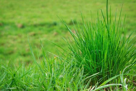 meadow  grass: Primavera prado, hierba