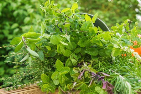 Tuinkruiden, geneeskrachtige planten Stockfoto