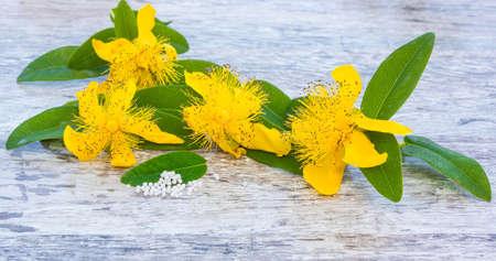 medicinal plant: St. Johns wort, a medicinal plant of 2015