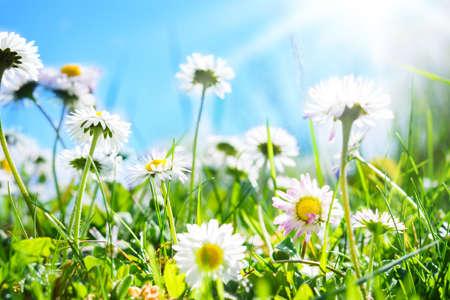 Daisies, flower meadow Imagens - 39894492