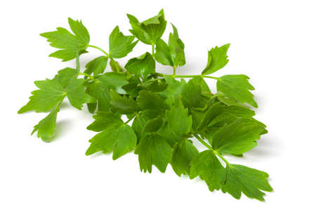 Lovage, isolated