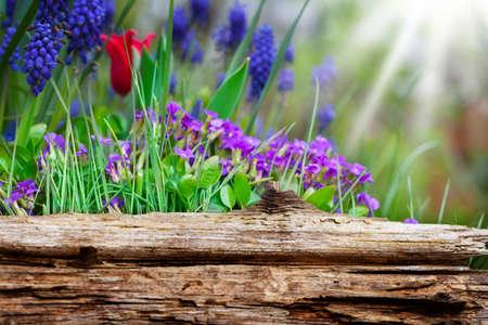 Spring flowers behind wooden board