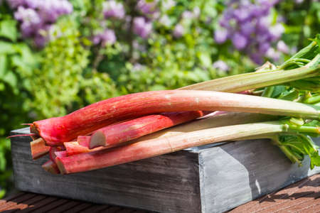 rhubarb: Rhubarb on wooden box Stock Photo