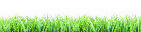 pastures: Meadow, summer meadow, isolated Stock Photo