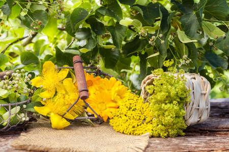 homeopatia: Homeopatía, plantas medicinales, hierbas medicinales Foto de archivo