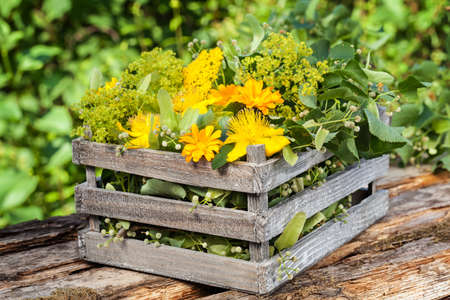 medicinal herbs: Medicinal herbs, medicinal plants in wooden box for Homeopathy