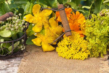 plantas medicinales: Homeopatía, plantas medicinales, hierbas medicinales Foto de archivo