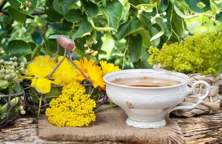 plantas medicinales: Taza de t� de hierbas y plantas medicinales Foto de archivo