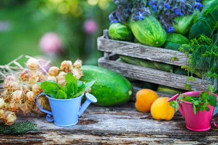 Harvest in the garden, cucumbers, apricots, herbs