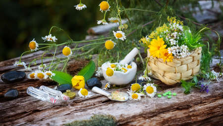 Kamille, Heilpflanzen, Homöopathie Standard-Bild - 43827639