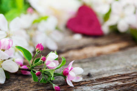spring background: Apple blossoms on old wooden board Stock Photo