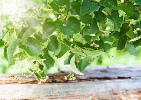 linden blossom: Linden blossoms, lime blossom