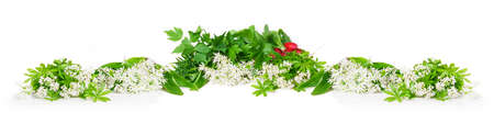 sweet woodruff: Wild garlic, sweet woodruff and radishes, isolated Stock Photo