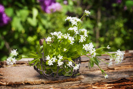 woodruff: Woodruff, collected in the basket