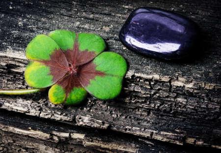 lucky clover: Lucky clover, trefoil and stone on wood