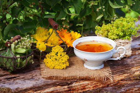 Cup of herbal tea and medicinal plants Stock Photo