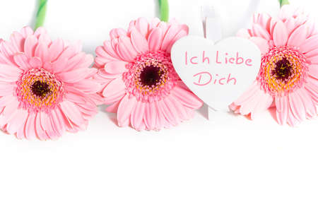 I love you heart and pink gerbera, isolated on white