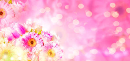 Gerbera, tulips, roses on pink background with copy space, banner with bokeh Standard-Bild