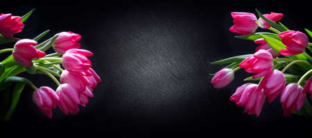 Pink tulips in front of a slate as a panorama with copy space