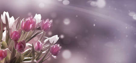 Pink and white tulips in front of pastel - bokeh, Vintage banner Standard-Bild