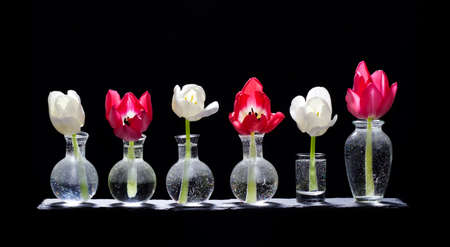 Tulip flowers in small glass vases on a slate board
